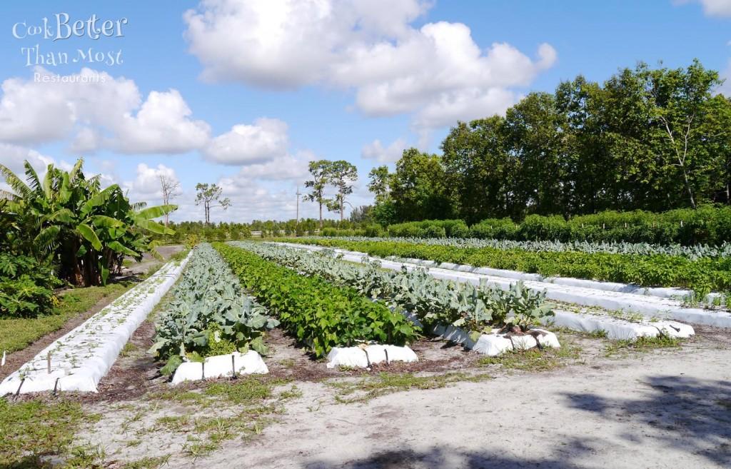 Kai Kai Farm Indiantown Florida