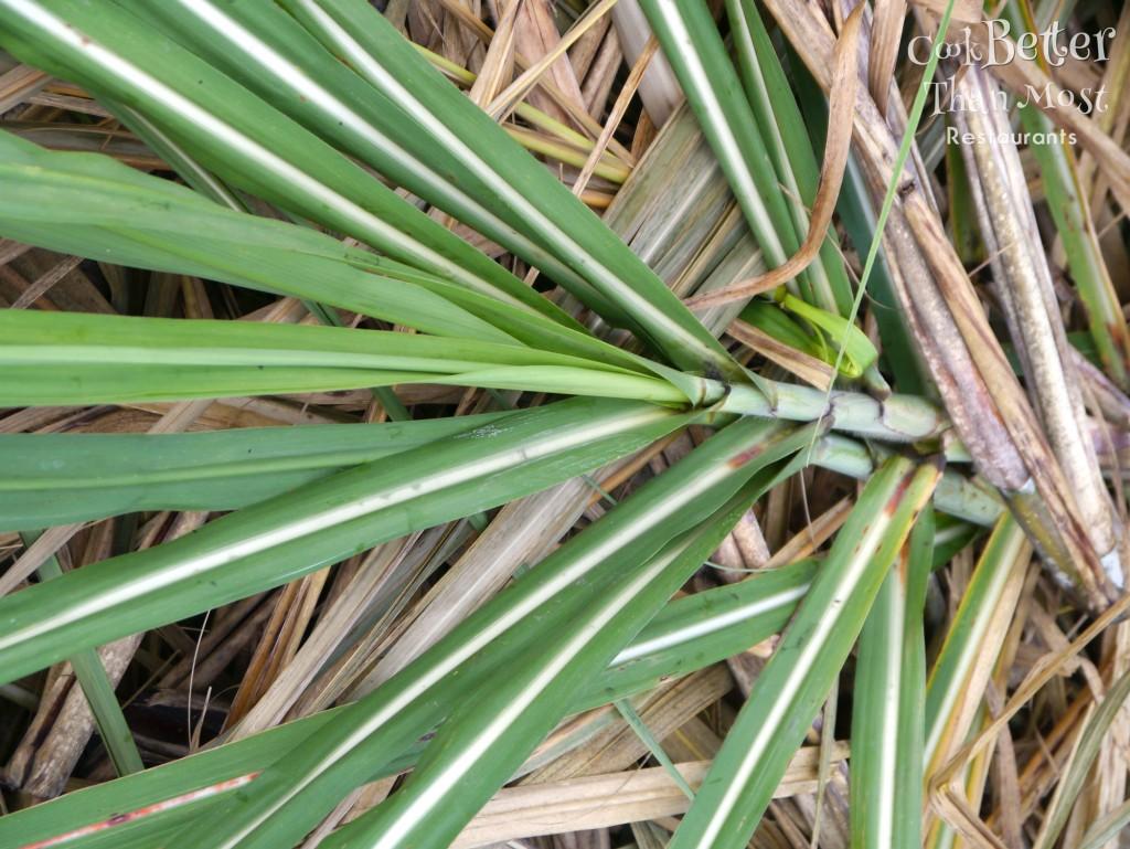 Raisin Cane Tour: Sugarcane Farm and Refinery Tour
